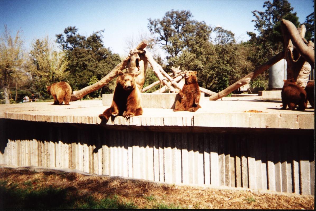 Domingo campestre en el zoológico de ...